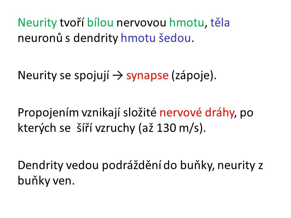 Neurity tvoří bílou nervovou hmotu, těla neuronů s dendrity hmotu šedou.