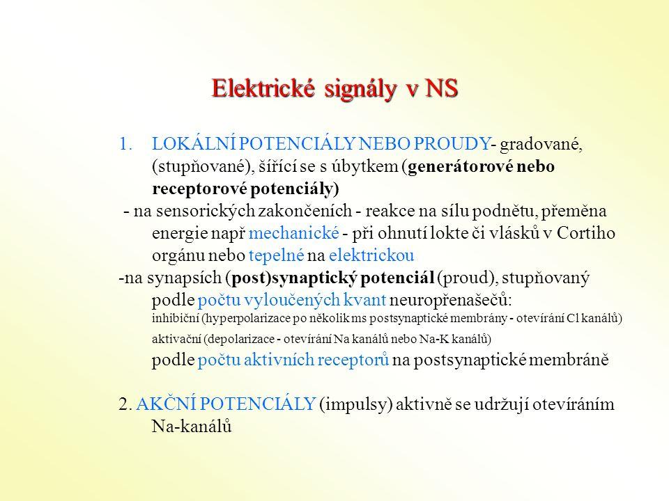 Elektrické signály v NS