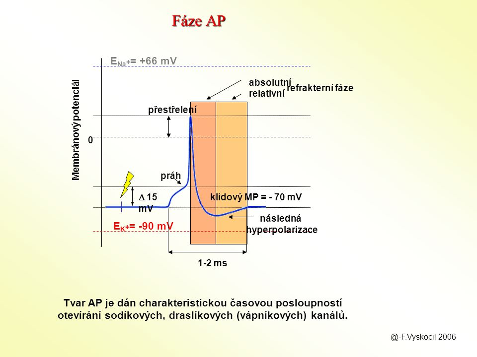 následná hyperpolarizace