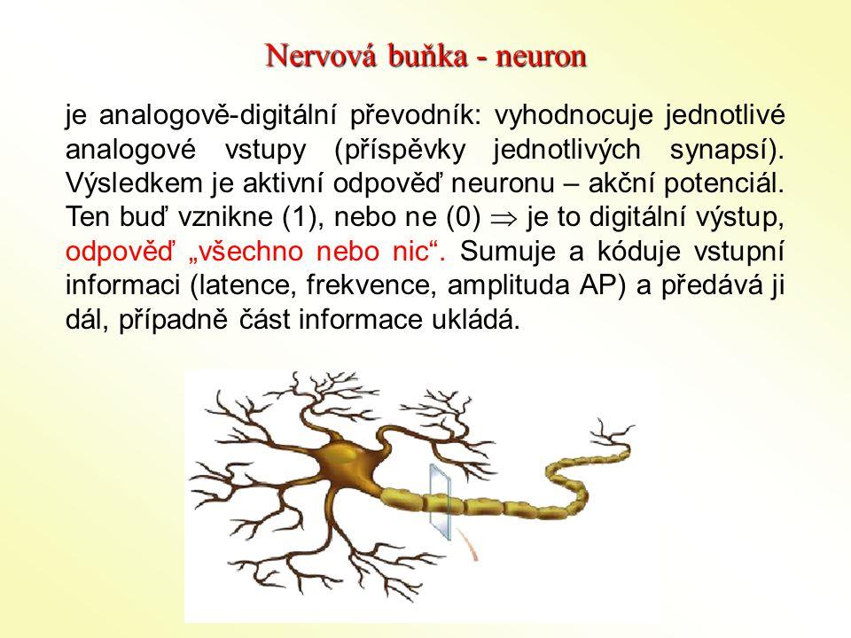 Nervová buňka - neuron
