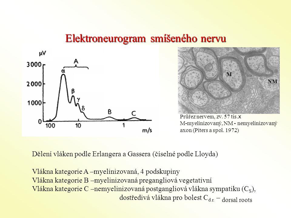 Elektroneurogram smíšeného nervu