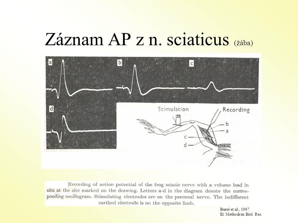 Záznam AP z n. sciaticus (žába)