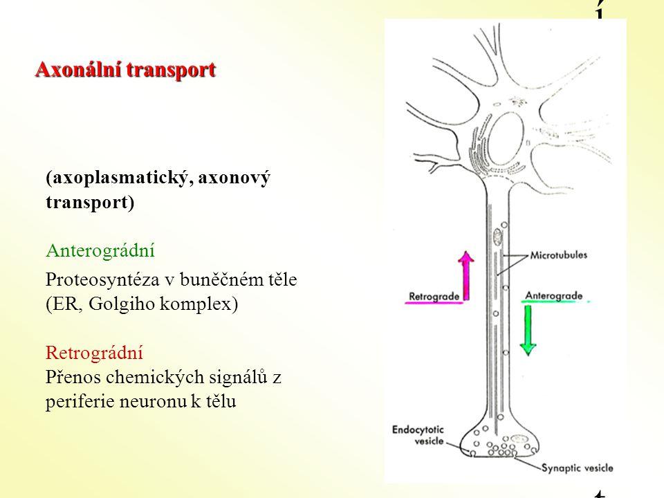 Axonální transport Axonální transport