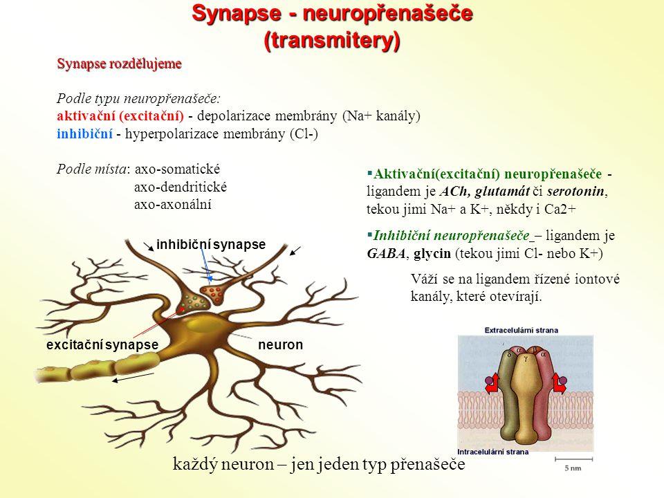 Synapse - neuropřenašeče (transmitery)