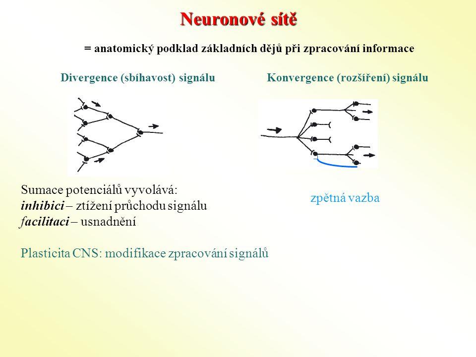 Neuronové sítě Sumace potenciálů vyvolává:
