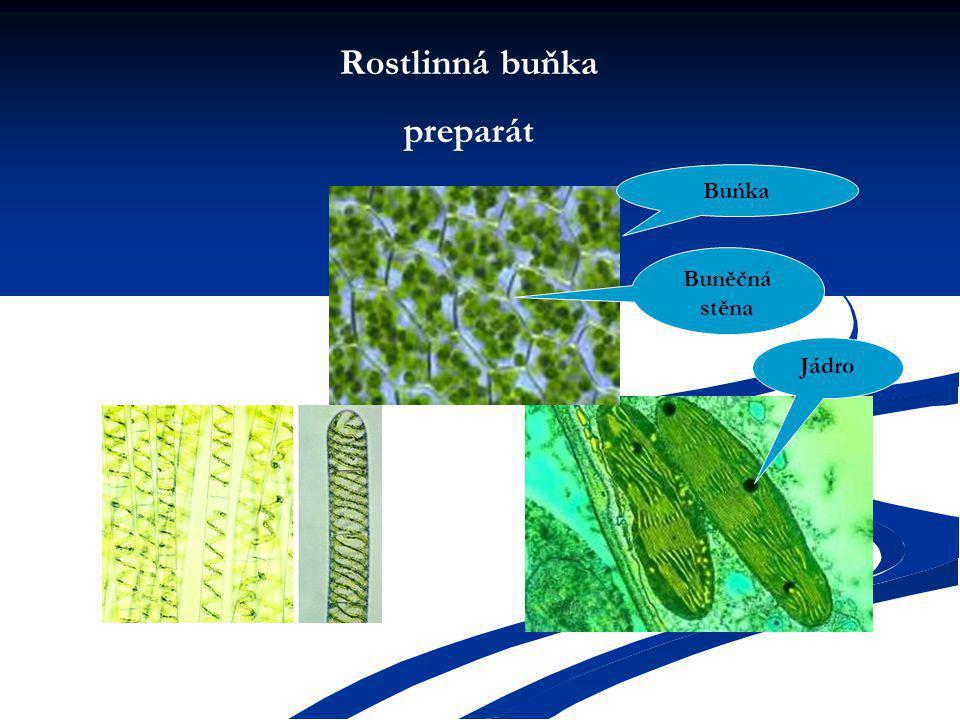 Rostlinná buňka preparát