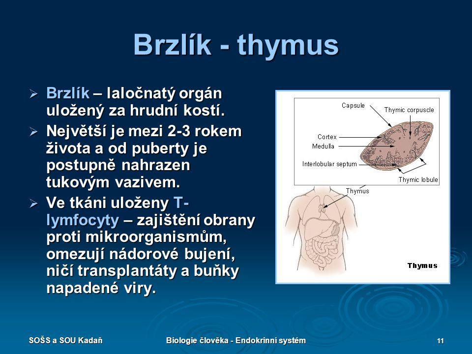 Biologie člověka - Endokrinní systém