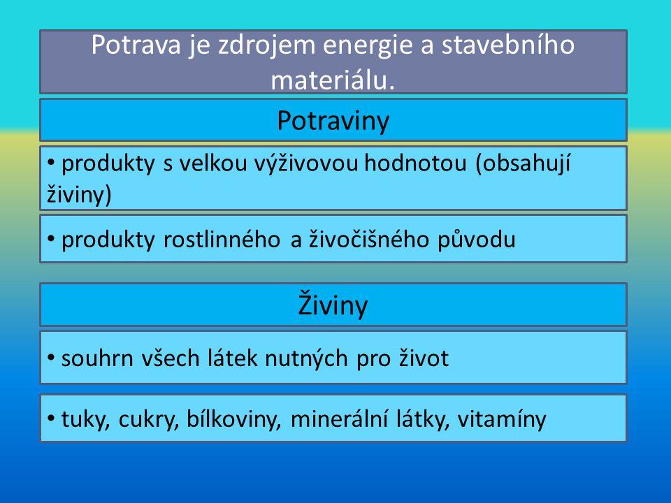 Potrava je zdrojem energie a stavebního materiálu.