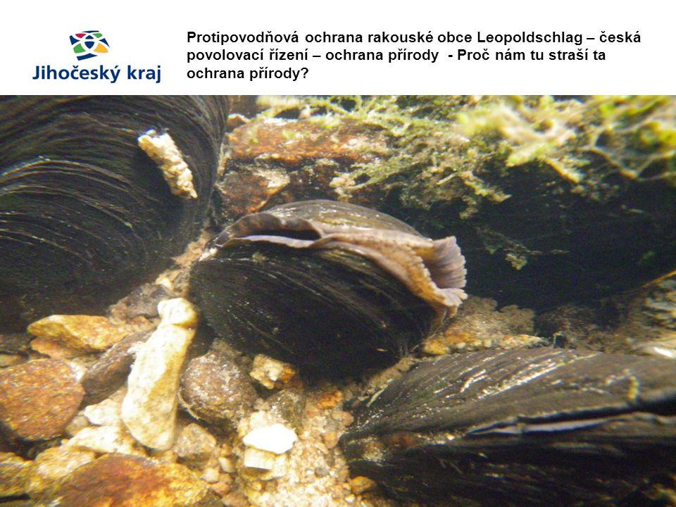 Protipovodňová ochrana rakouské obce Leopoldschlag – česká povolovací řízení – ochrana přírody - Proč nám tu straší ta ochrana přírody