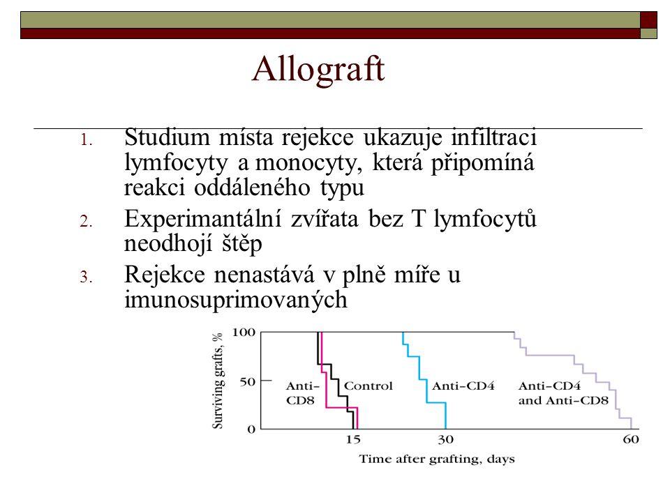 Allograft Studium místa rejekce ukazuje infiltraci lymfocyty a monocyty, která připomíná reakci oddáleného typu.