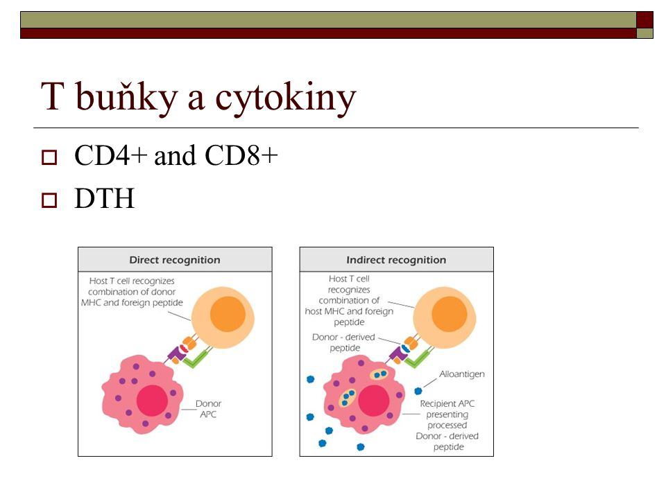 T buňky a cytokiny CD4+ and CD8+ DTH