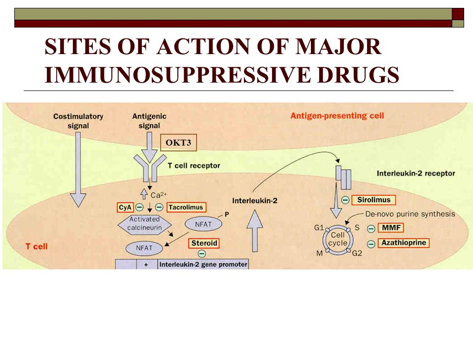 SITES OF ACTION OF MAJOR IMMUNOSUPPRESSIVE DRUGS