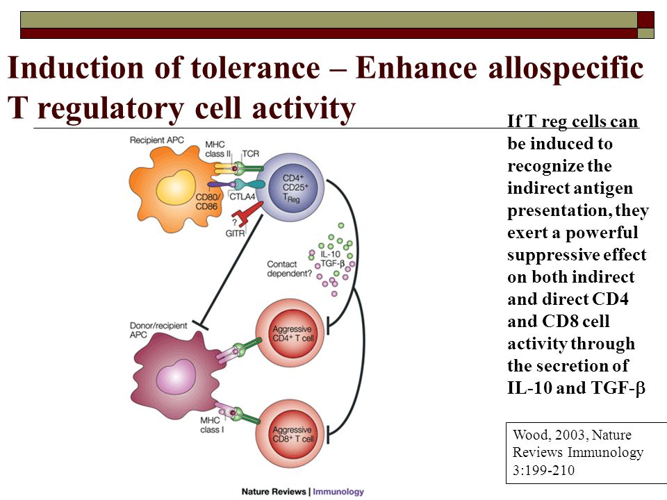 Induction of tolerance – Enhance allospecific T regulatory cell activity