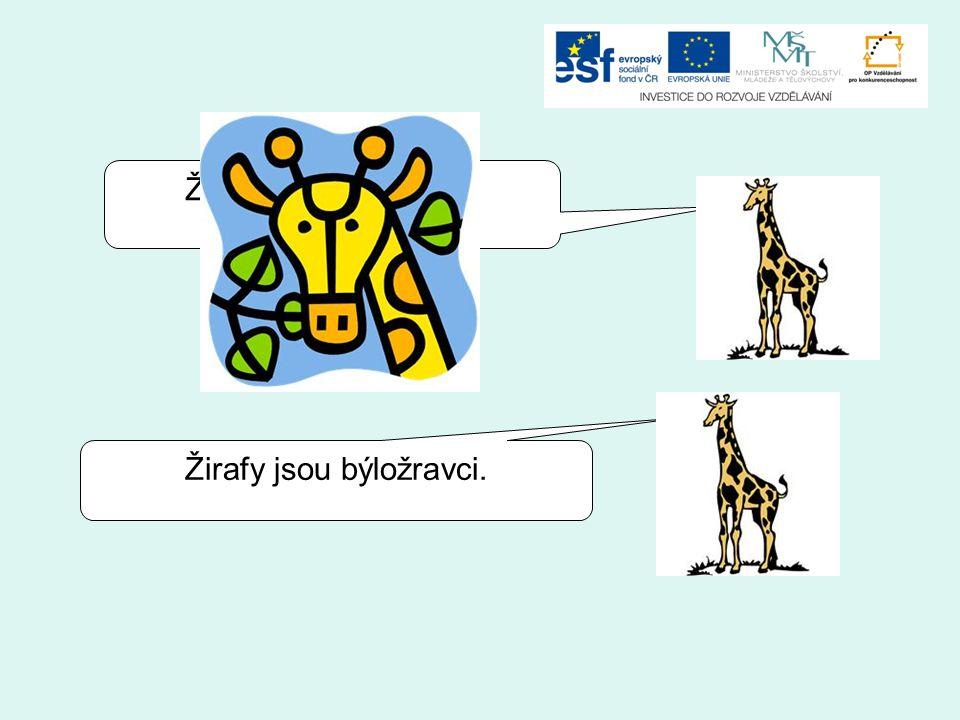 Žirafy jsou býložravci.