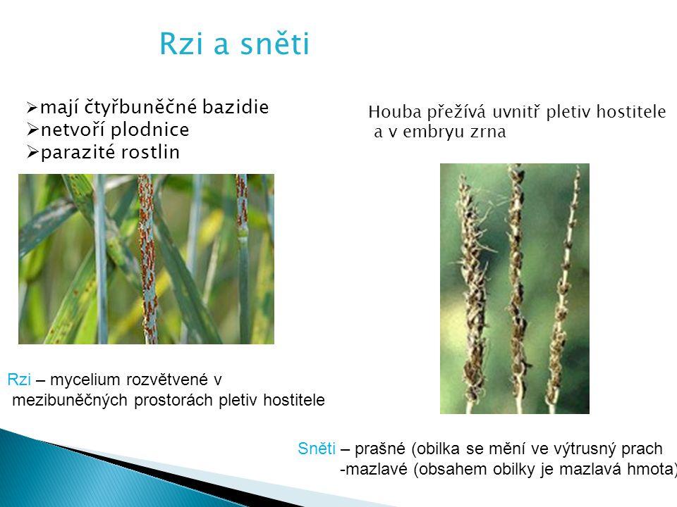 Rzi a sněti netvoří plodnice parazité rostlin mají čtyřbuněčné bazidie
