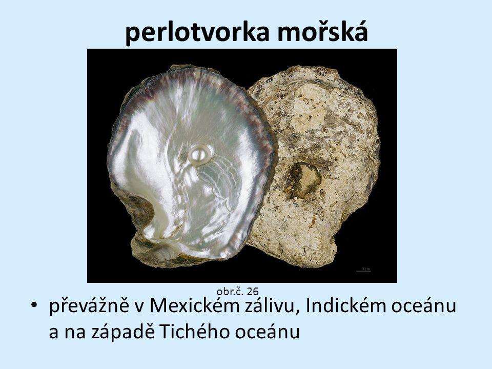 perlotvorka mořská obr.č. 26 převážně v Mexickém zálivu, Indickém oceánu a na západě Tichého oceánu