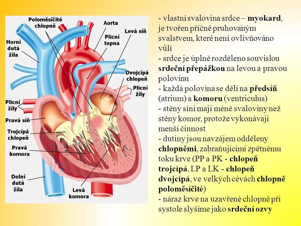 - vlastní svalovina srdce – myokard, je tvořen příčně pruhovaným svalstvem, které není ovlivňováno vůlí