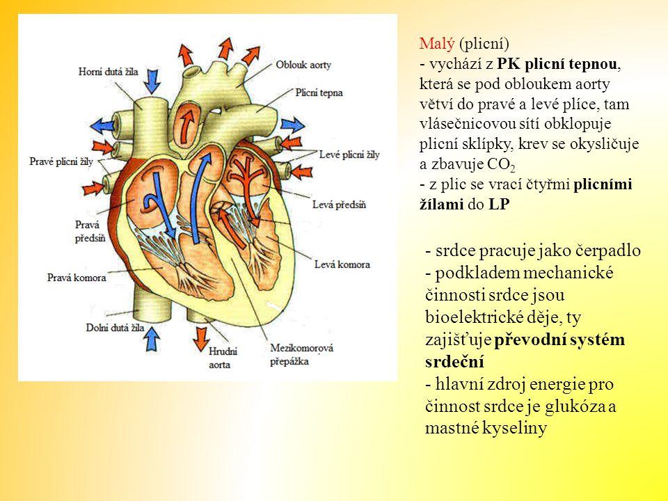 - srdce pracuje jako čerpadlo