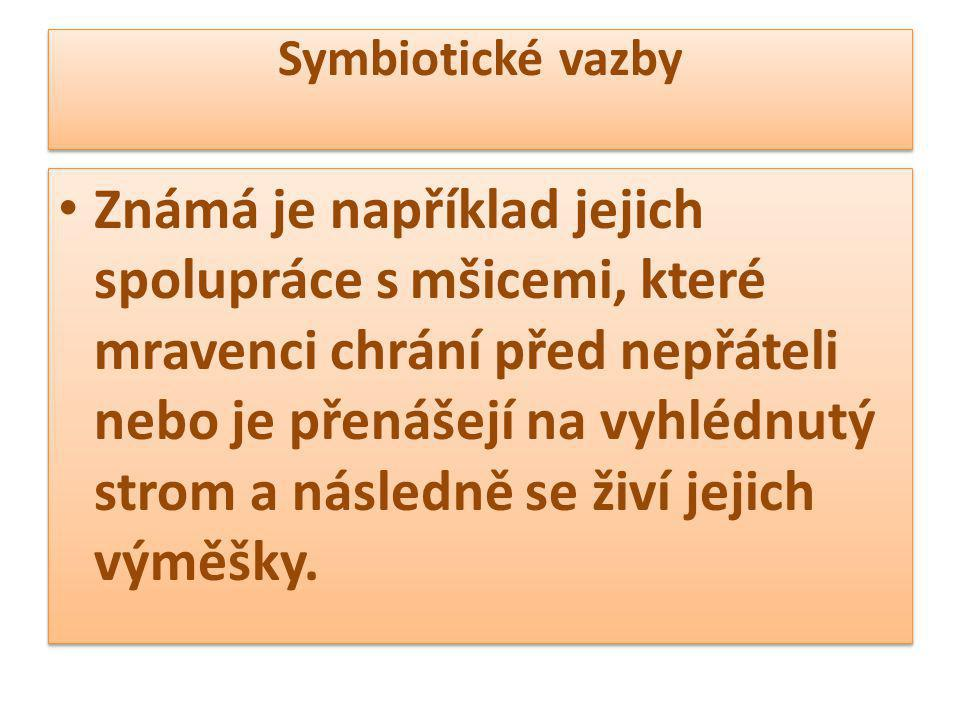 Symbiotické vazby