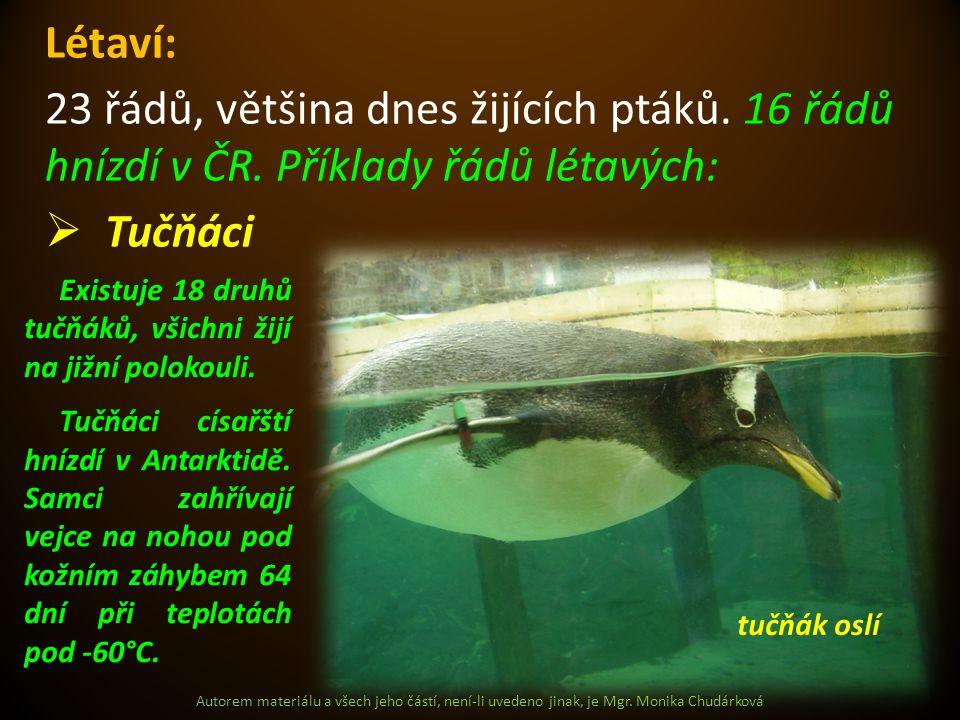 Létaví: 23 řádů, většina dnes žijících ptáků. 16 řádů hnízdí v ČR. Příklady řádů létavých: Tučňáci.
