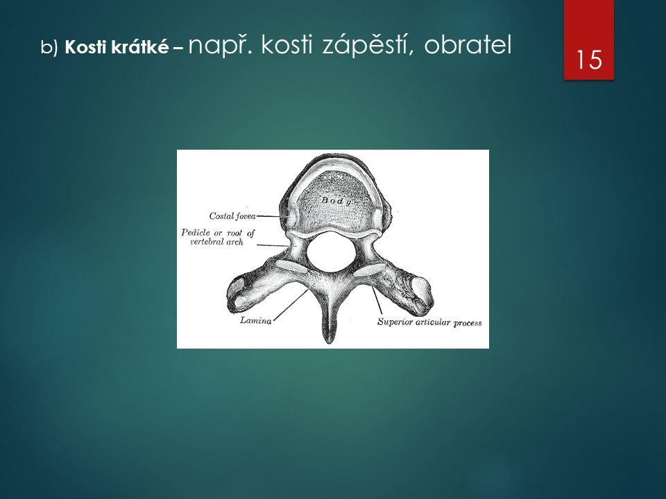 b) Kosti krátké – např. kosti zápěstí, obratel