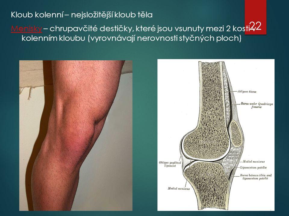Kloub kolenní – nejsložitější kloub těla Menisky – chrupavčité destičky, které jsou vsunuty mezi 2 kosti v kolenním kloubu (vyrovnávají nerovnosti styčných ploch)