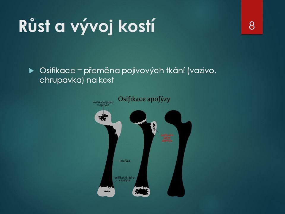 Růst a vývoj kostí Osifikace = přeměna pojivových tkání (vazivo, chrupavka) na kost