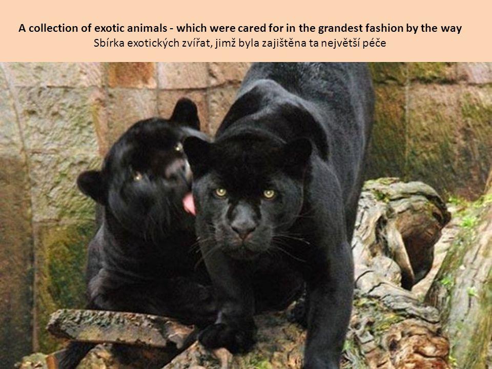 Sbírka exotických zvířat, jimž byla zajištěna ta největší péče