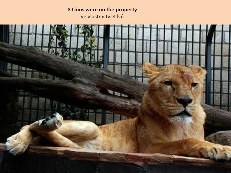 8 Lions were on the property