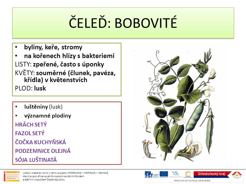 ČELEĎ: BOBOVITÉ byliny, keře, stromy na kořenech hlízy s bakteriemi