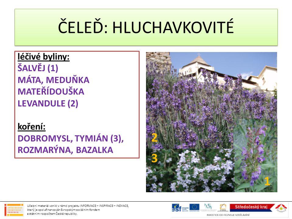 ČELEĎ: HLUCHAVKOVITÉ léčivé byliny: ŠALVĚJ (1) MÁTA, MEDUŇKA MATEŘÍDOUŠKA LEVANDULE (2) koření: DOBROMYSL, TYMIÁN (3), ROZMARÝNA, BAZALKA