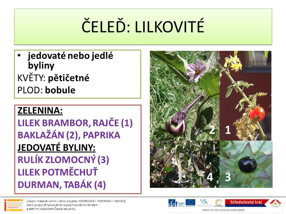 ČELEĎ: LILKOVITÉ 2 1 4 3 jedovaté nebo jedlé byliny KVĚTY: pětičetné