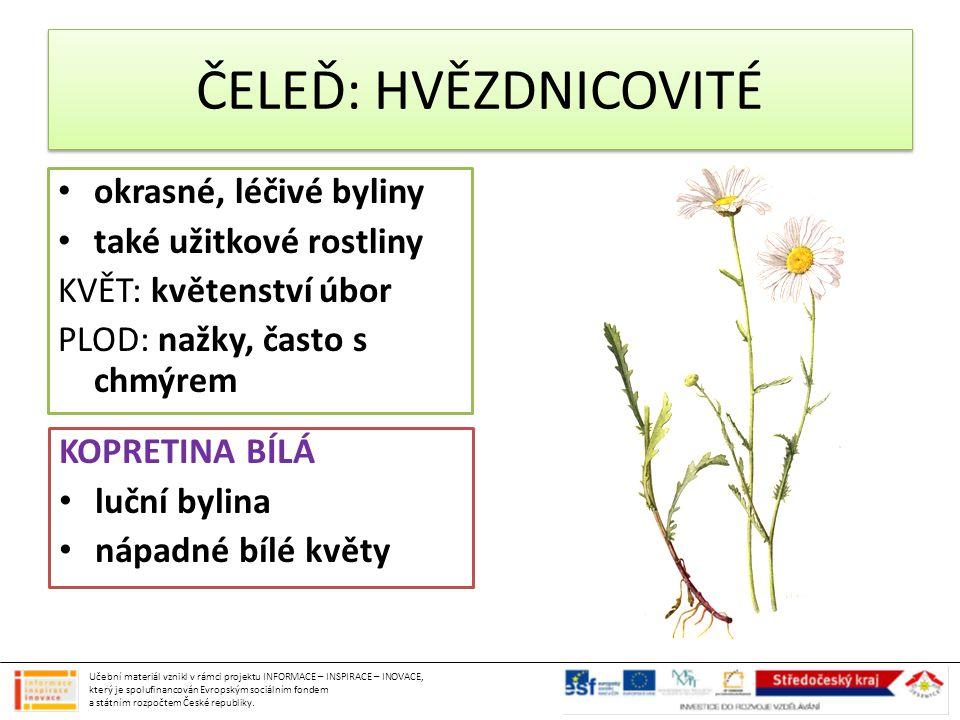 ČELEĎ: HVĚZDNICOVITÉ okrasné, léčivé byliny také užitkové rostliny