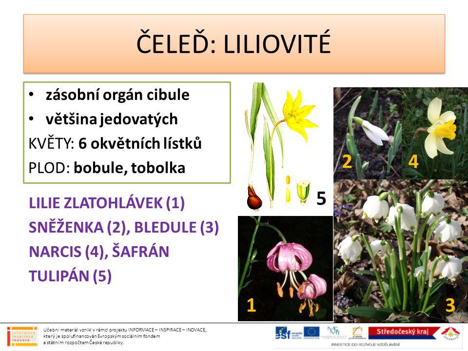 ČELEĎ: LILIOVITÉ 2 4 5 1 3 zásobní orgán cibule většina jedovatých