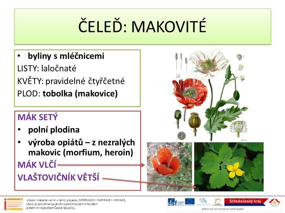 ČELEĎ: MAKOVITÉ byliny s mléčnicemi LISTY: laločnaté