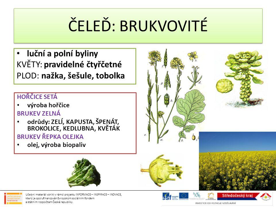 ČELEĎ: BRUKVOVITÉ luční a polní byliny KVĚTY: pravidelné čtyřčetné