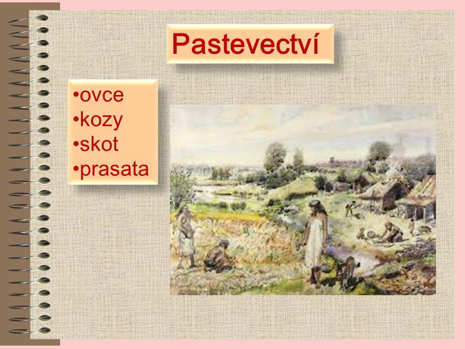 Pastevectví ovce kozy skot prasata