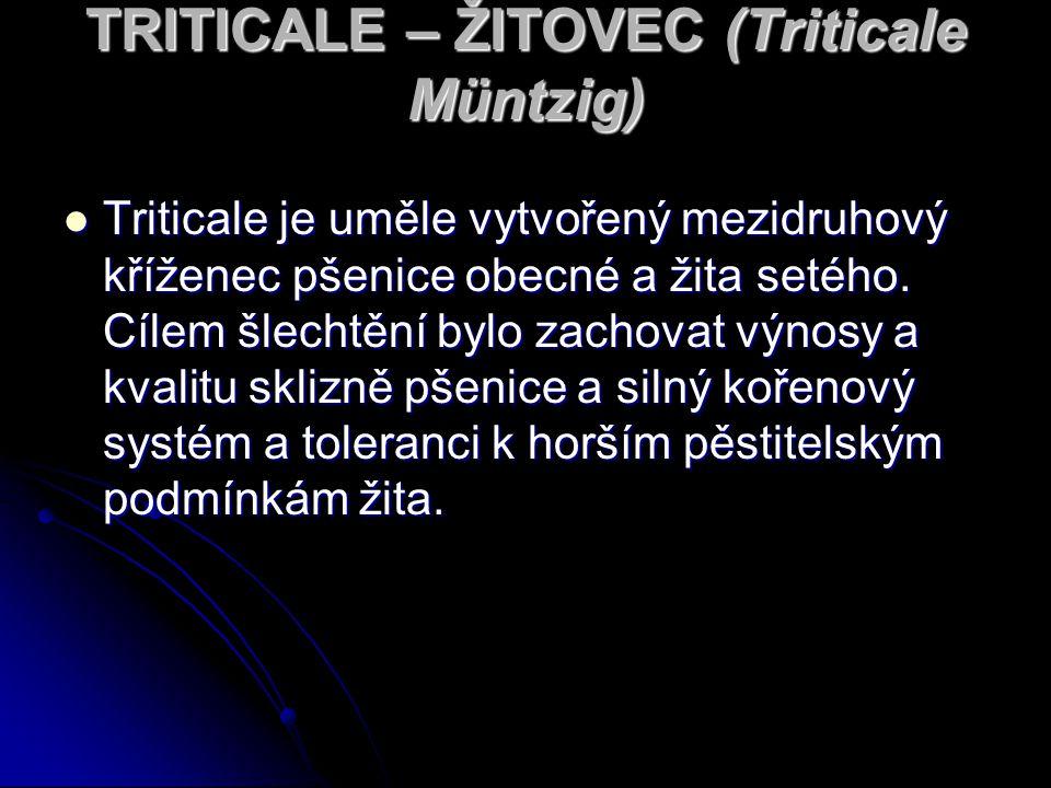 TRITICALE – ŽITOVEC (Triticale Müntzig)