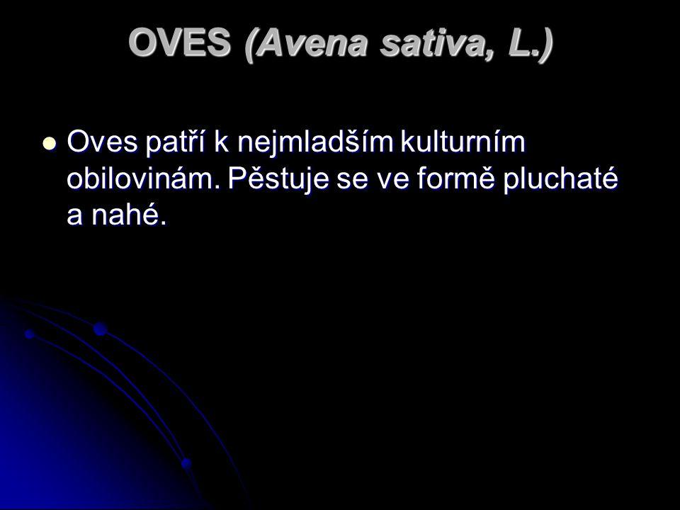 OVES (Avena sativa, L.) Oves patří k nejmladším kulturním obilovinám.