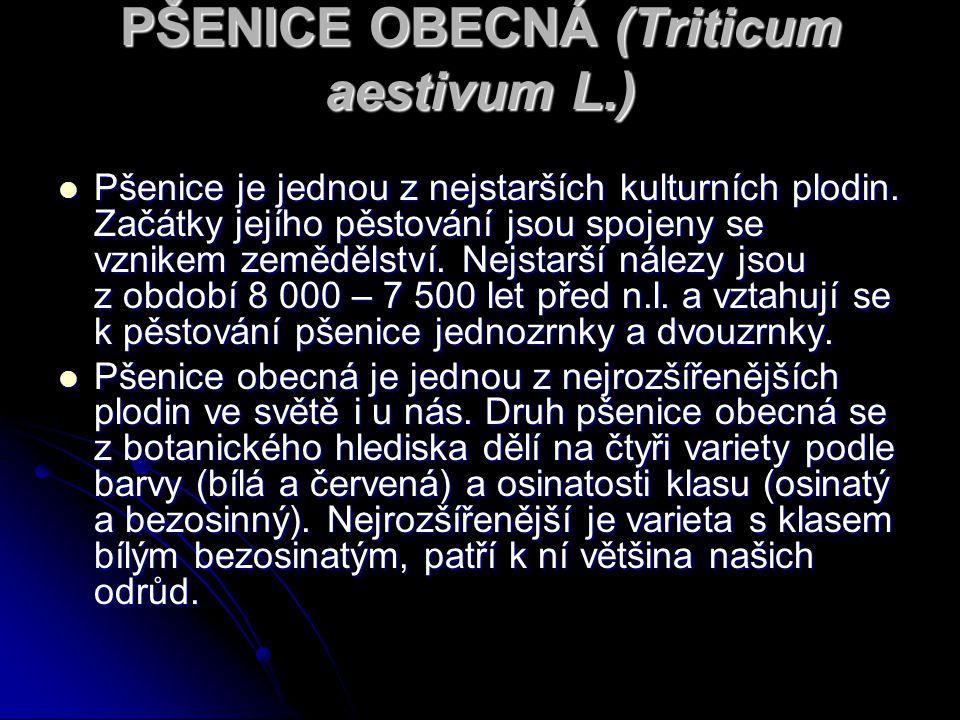 PŠENICE OBECNÁ (Triticum aestivum L.)