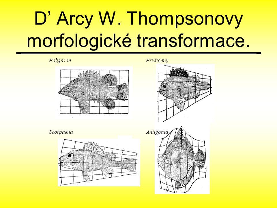 D' Arcy W. Thompsonovy morfologické transformace.