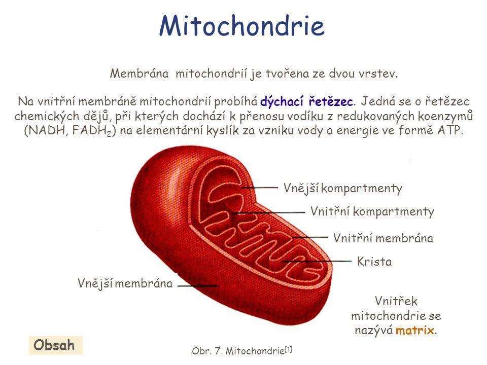 Mitochondrie Obsah Membrána mitochondrií je tvořena ze dvou vrstev.
