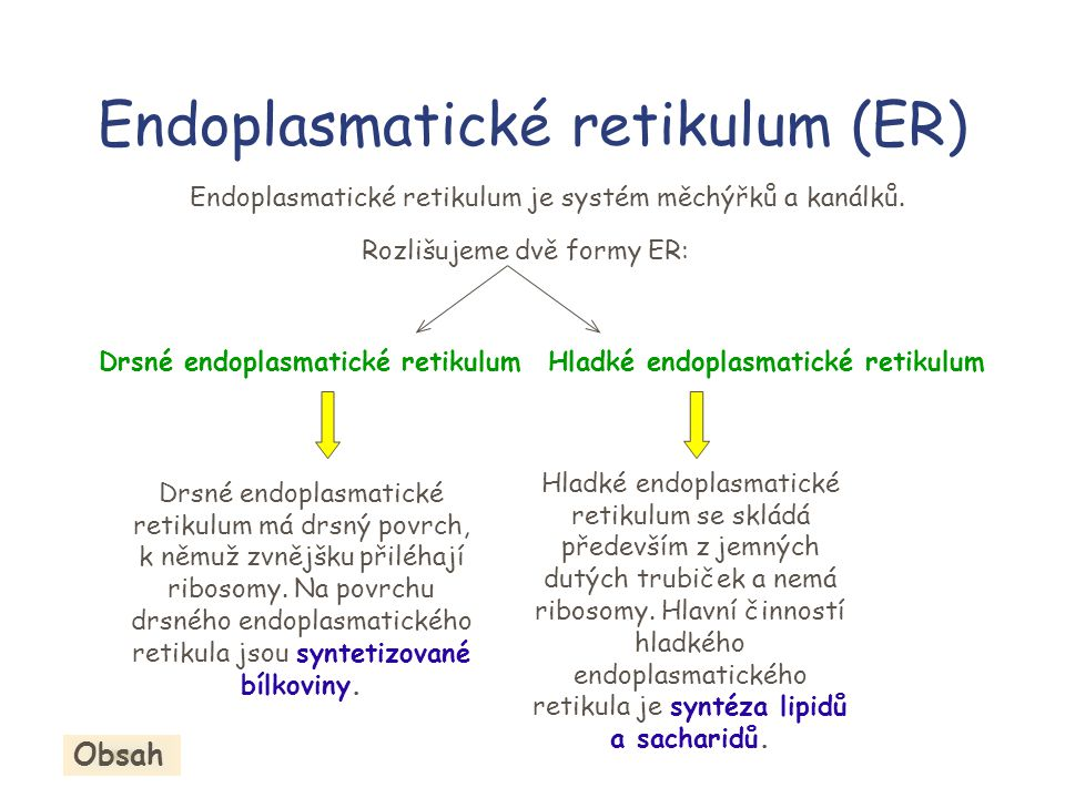 Endoplasmatické retikulum (ER)