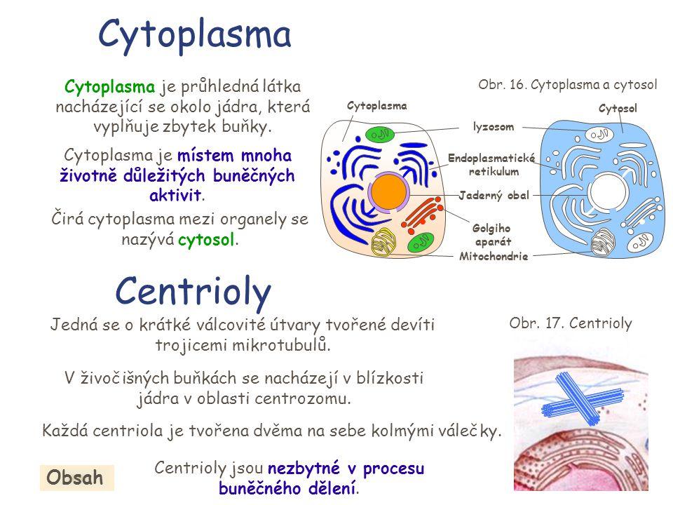 Cytoplasma Centrioly Obsah