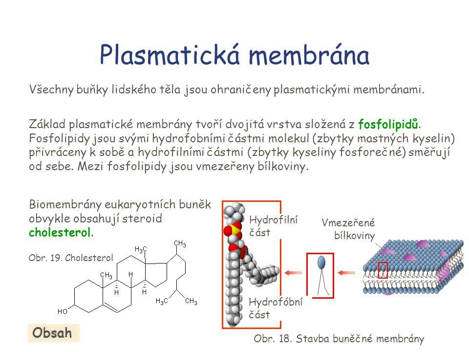 Plasmatická membrána Obsah