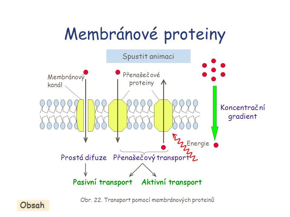 Membránové proteiny Obsah Spustit animaci Koncentrační gradient