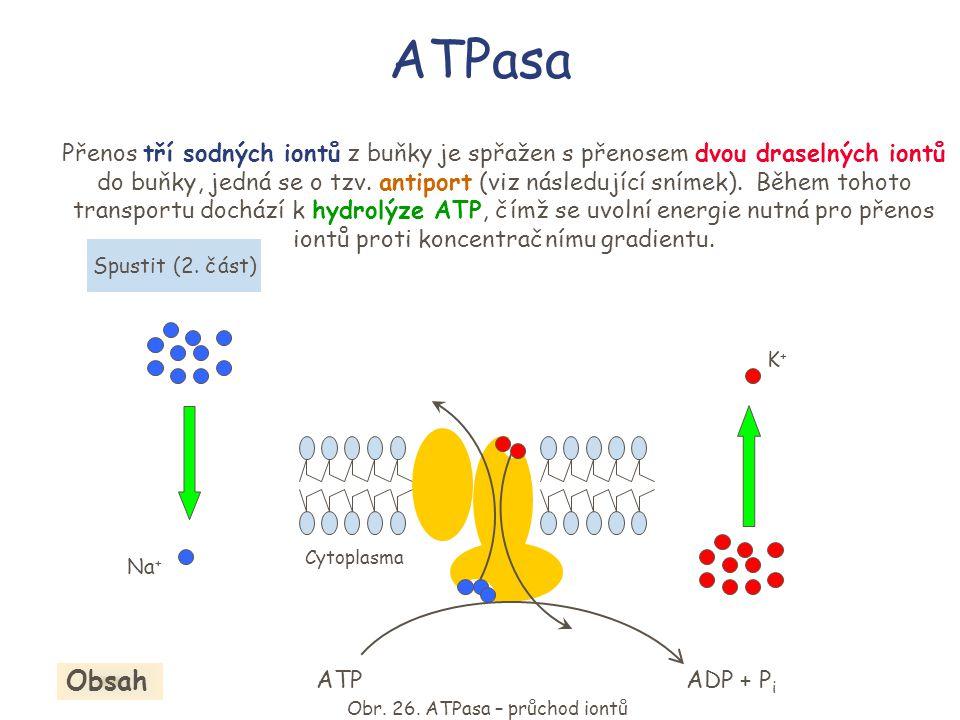 Obr. 26. ATPasa – průchod iontů