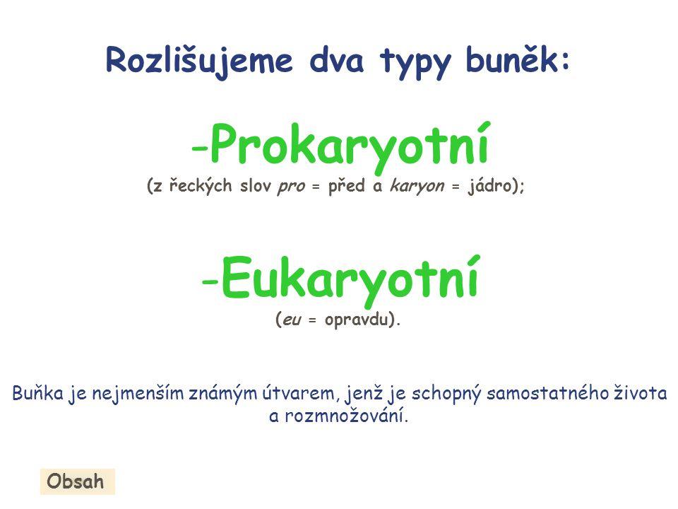Prokaryotní Eukaryotní