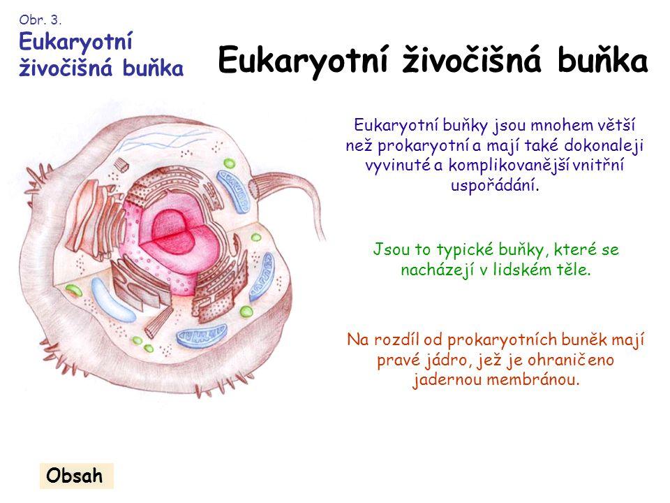 Eukaryotní živočišná buňka