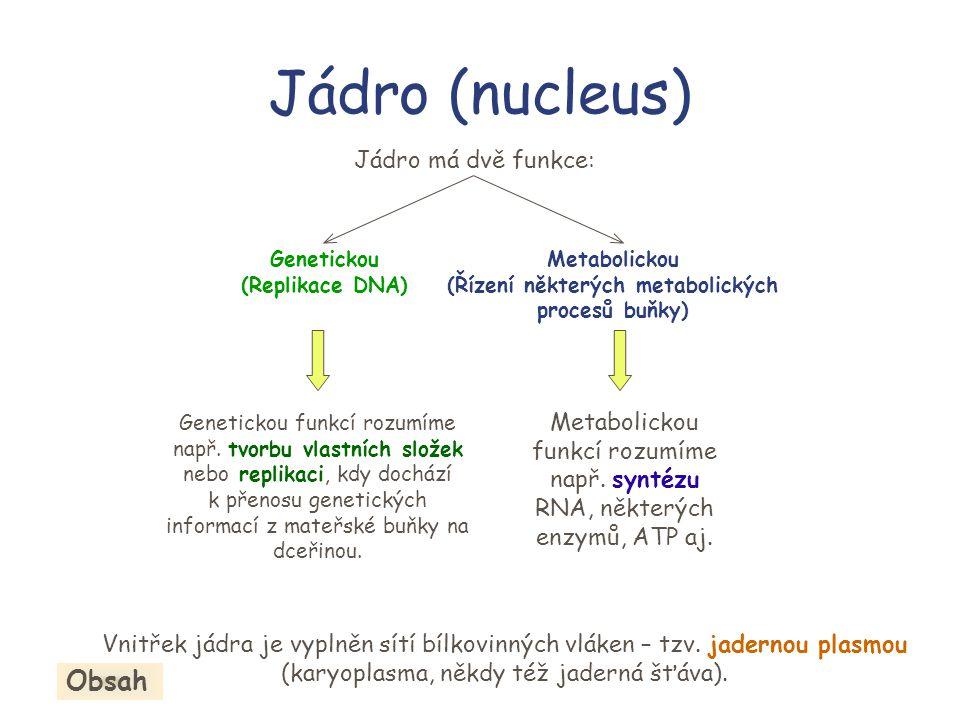 (Řízení některých metabolických procesů buňky)